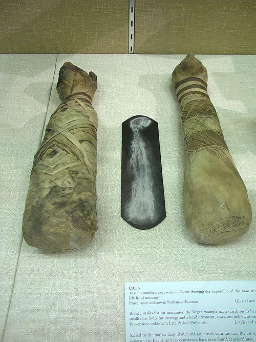 Мумии кошек. Эшмоловский музей.