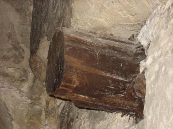 Ствол кедра в стене погребальной камеры пирамиды Хуни. Мейдум.