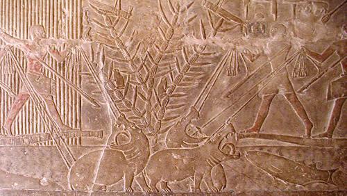 Изображение охоты на бегемотов. Мастаба Мереруки.